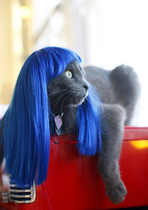 pelucas para gatos