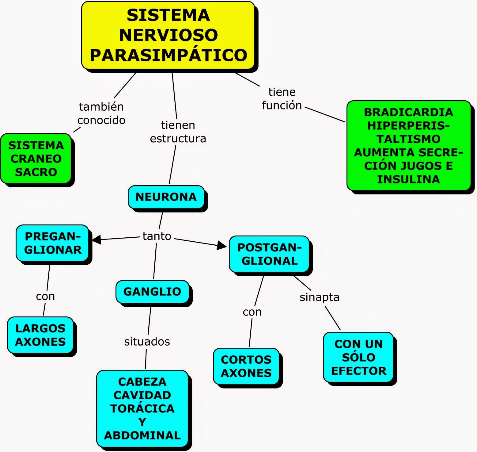 MAPA CONCEPTUAL SOBRE EL SISTEMA NERVIOSO PERIFÉRICO (SIMPÁTICO Y ...