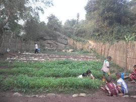 โครงการเกษตรเพืออาหารกลางวัน