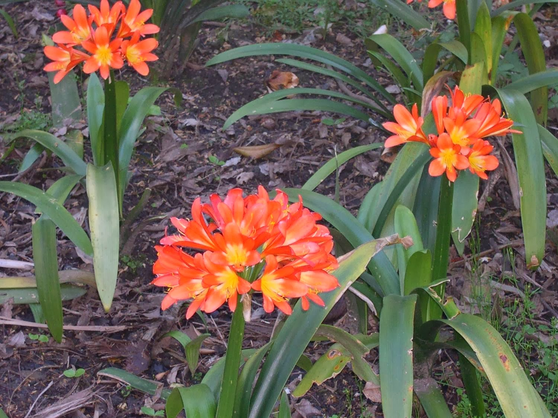 plantas de jardim que gostam de sombraUm jardim para cuidar Na
