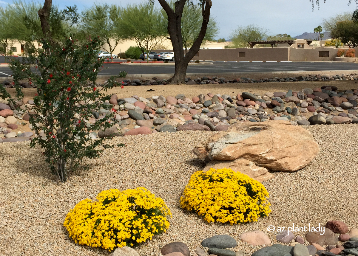 Fall Blooms for the Southwest Garden - Ramblings from a ...