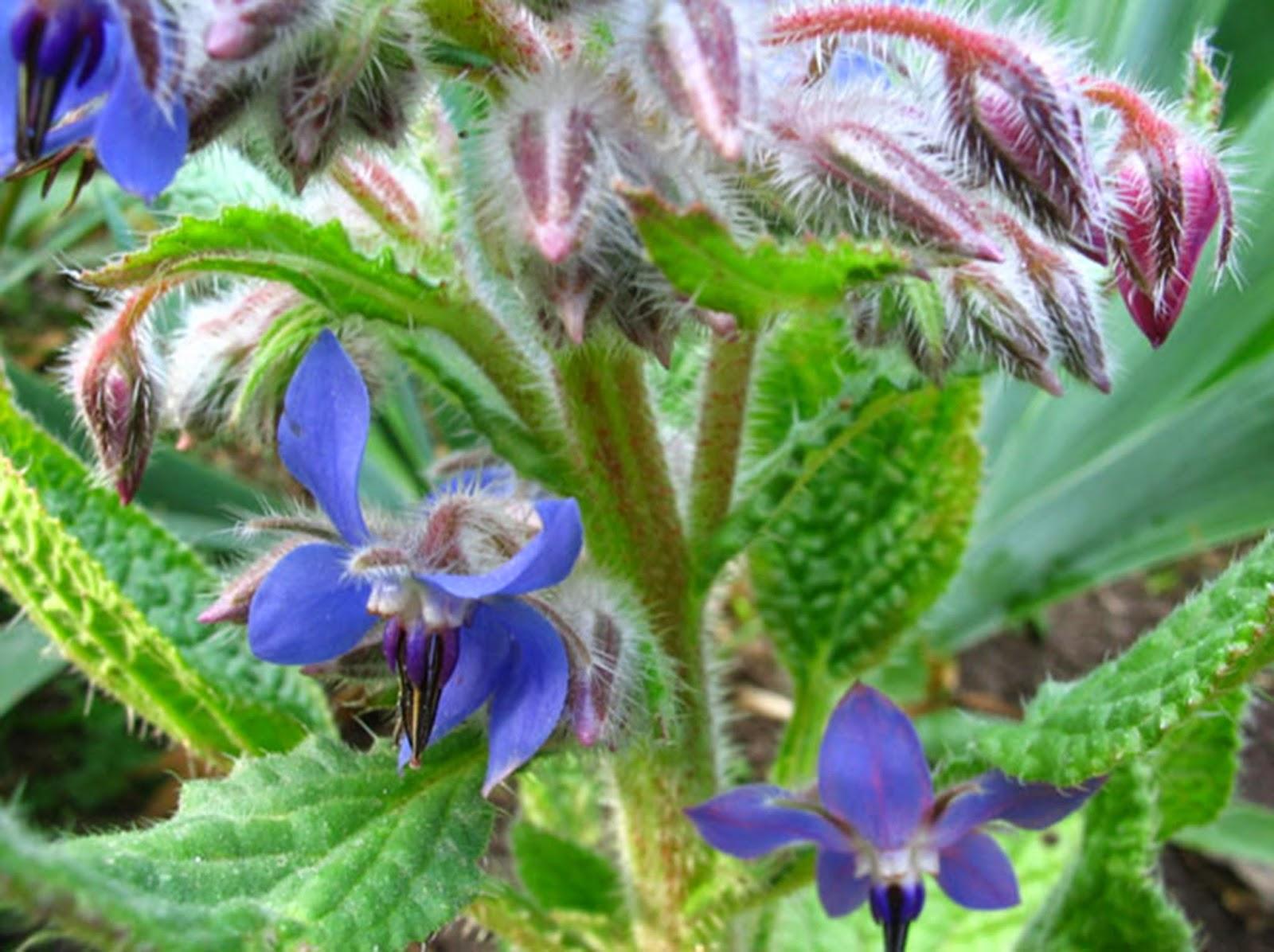 La magia de las flores y hierbas naturales seg 250 n tu tipo de piel