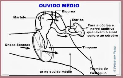 Esquema do ouvido médio e seus ossos: martelo, bigorna e estribo.