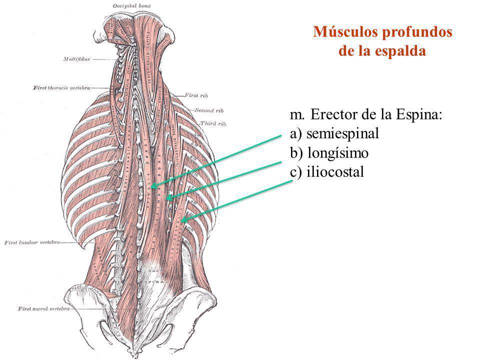 Moderno Imágenes De La Columna Anatomía Patrón - Imágenes de ...