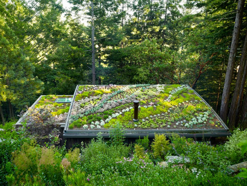 The flying tortoise beautiful living roof gardens for Rooftop gardening