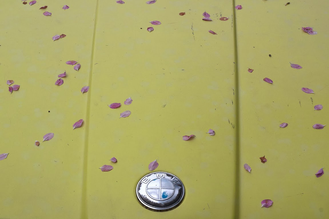 pink petals on a vintage yellow BMW