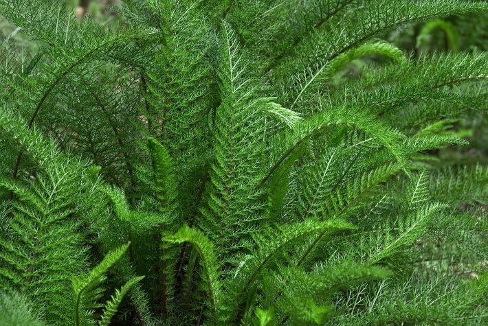 casa fáceis de fazer e promovem bem estar a simples mistura de ervas