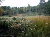 boschi di baselga