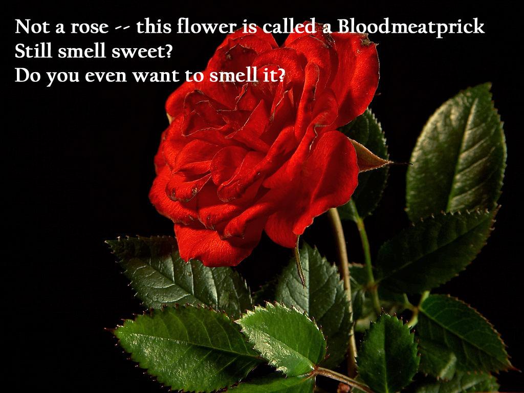 http://2.bp.blogspot.com/-x2Pg3INLmv8/T2d6klaIjJI/AAAAAAAAAI0/5iXZl-VtyBY/s1600/red-rose-flower-wallpaper-6.jpg