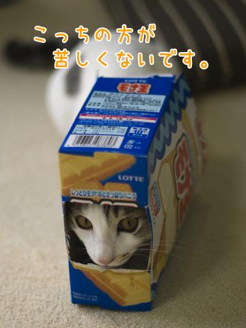 子猫の被り物