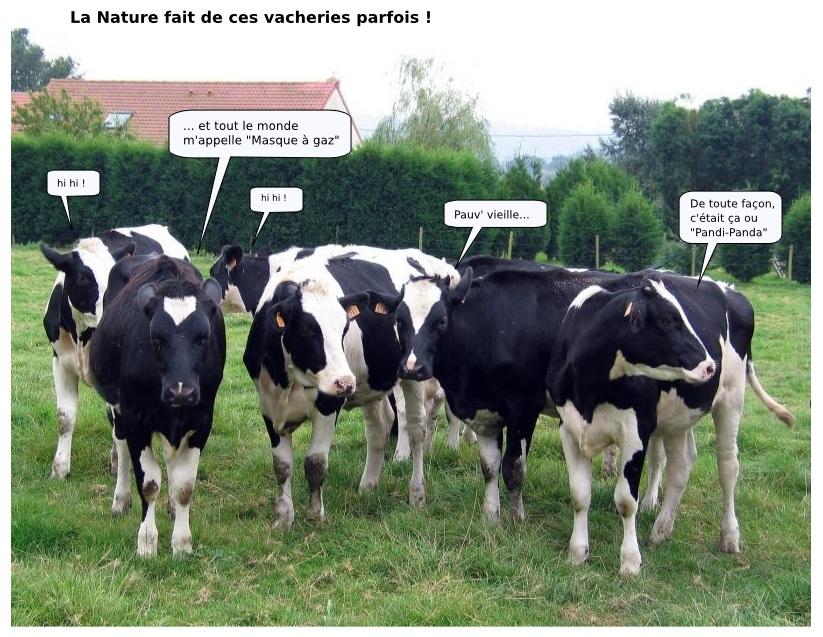 Humour vache 4 le caf de la ville - Vache dessin humour ...