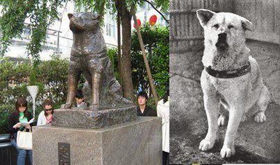 كلب ينتظر صديقة عشر سنوات امام محطة القطار - الكلب هاتشيكو - Hachi: A Dog's Tale