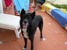 Roco,el precioso perro de Leticia