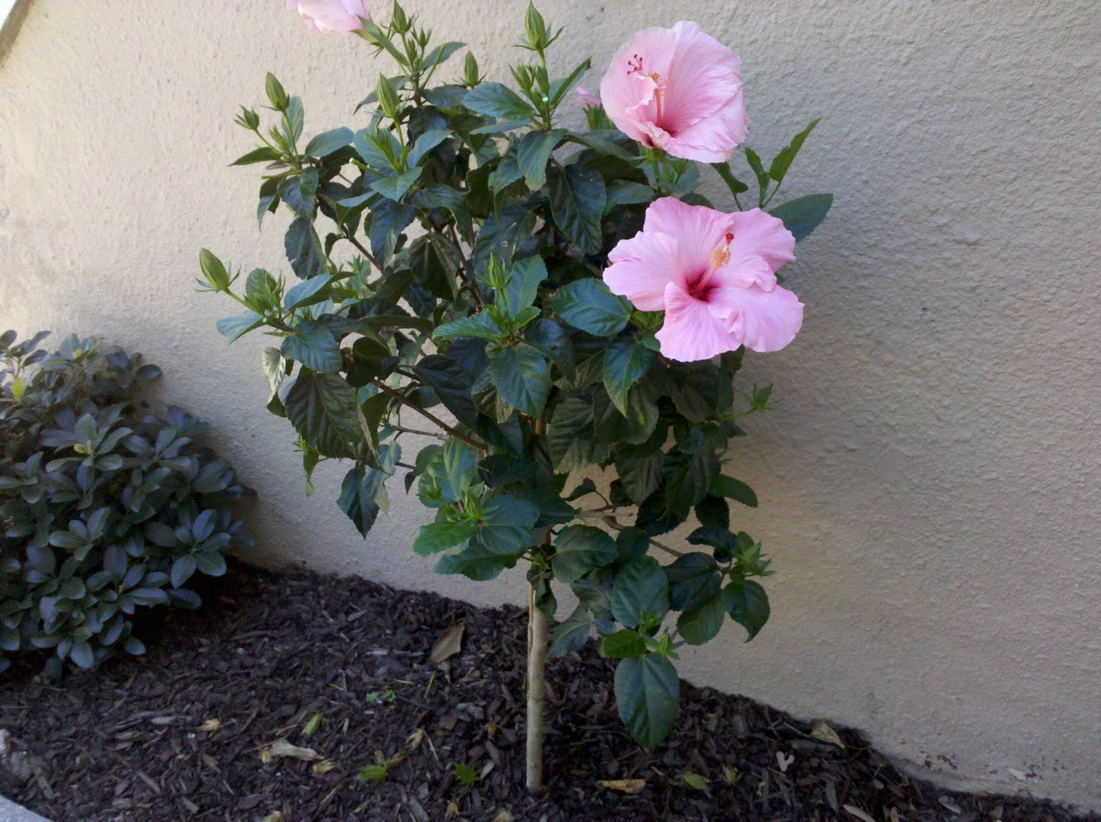Uptown Girl Wake Up And Smell The Hibiscus