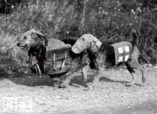 Animales en la guerra