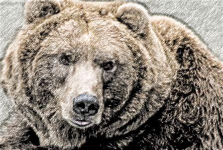 Oq Significa Sonhar Com Urso Preto