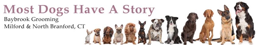 Most Dogs Have A Story