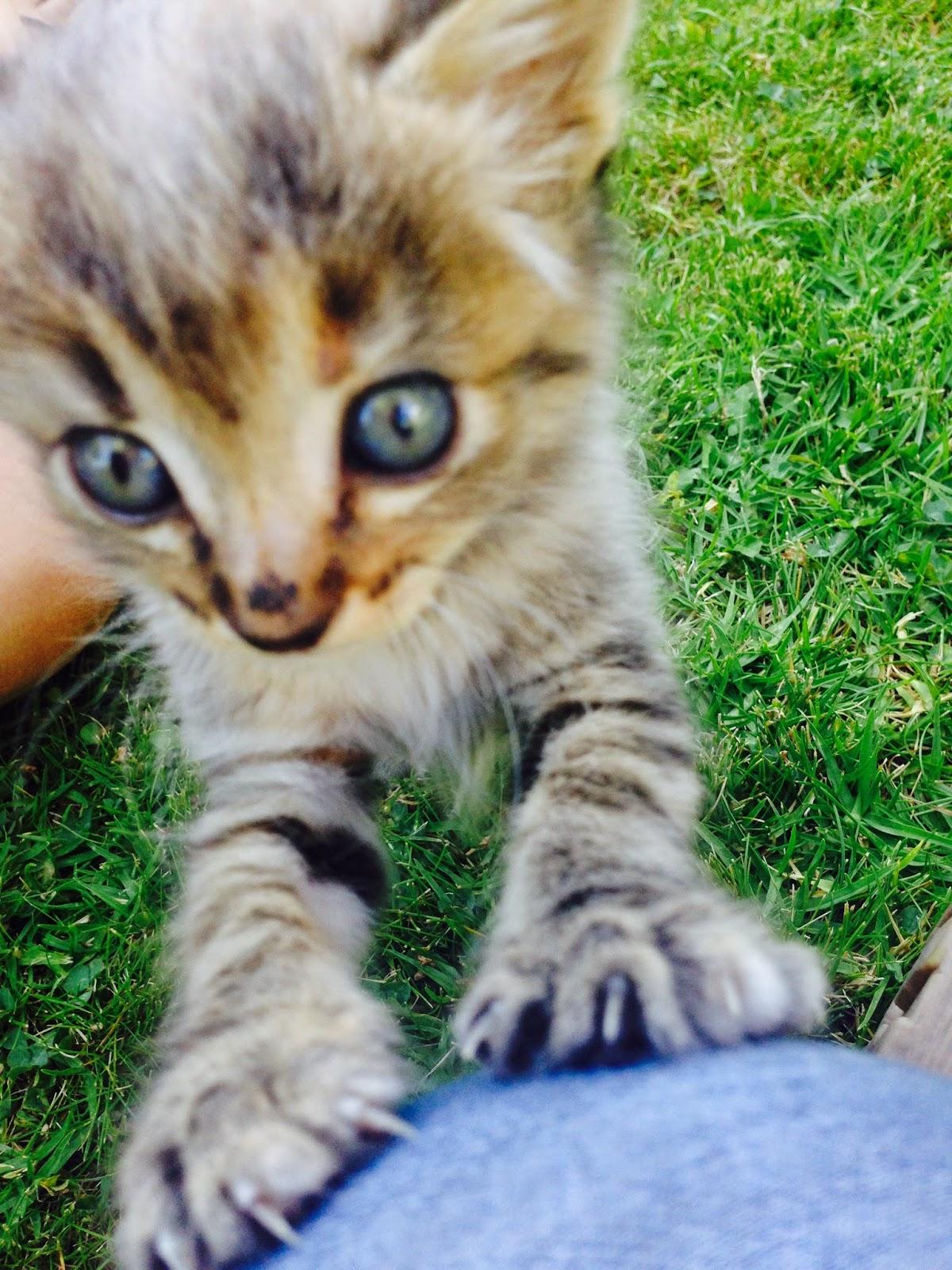 Gatitos que buscan hogar