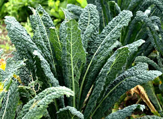 Health_Benefits_of_Kale_Juice_fruits_vegetables_benefits.blogspot.com(6)