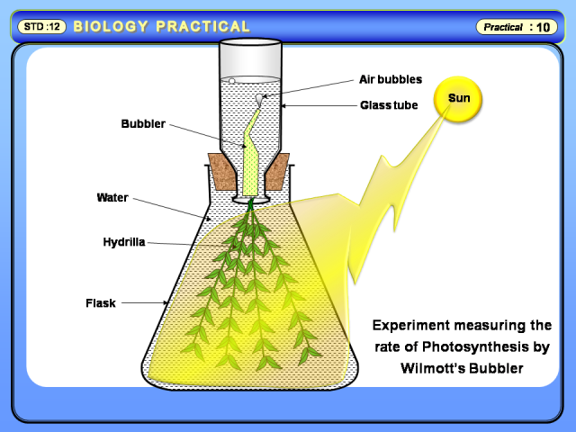 effects light quality rate photosynthesis measure through Wavelength of light affect on the rate of photosynthesis of elodea canadensis, measured by oxygen released (mg/l)  (usually through a usb chord), making sure that .