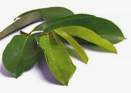 Pengobatan Herbal Penyakit Gonore