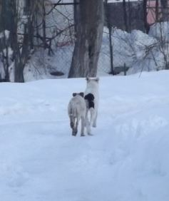 Centroabruzzonews lupi alle porte di sulmona cittadini for Ardeatina arredamenti di lupi gabriella