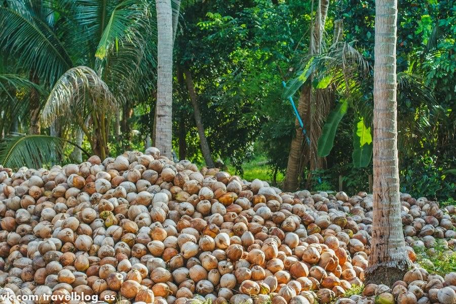 Таиланд - кокосовый рай
