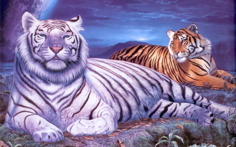 White Tiger Wallpaper Free Hd Wallpaper