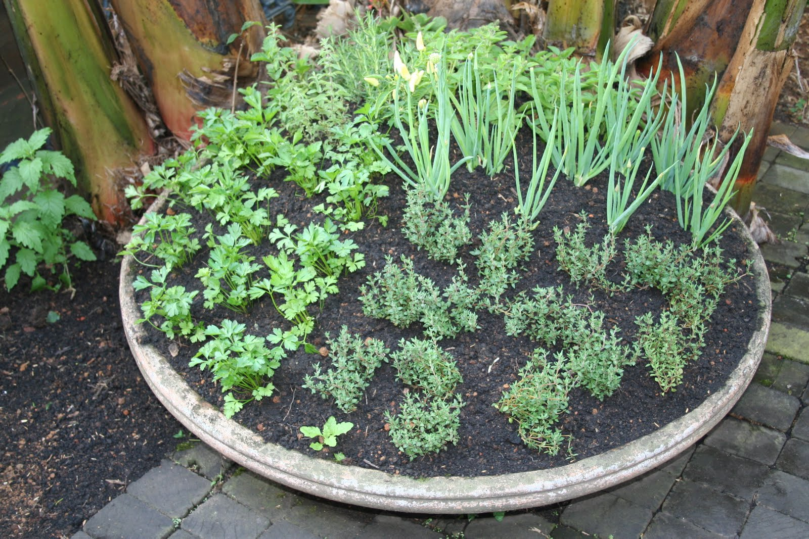Fazendo horta