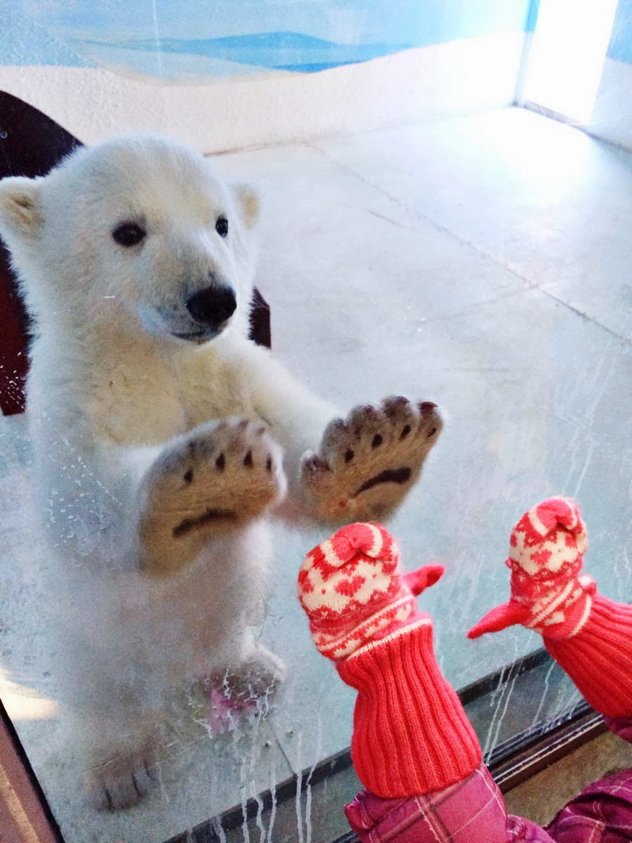 Funny animals of the week - 28 February 2014 (40 pics), polar bear cub at zoo