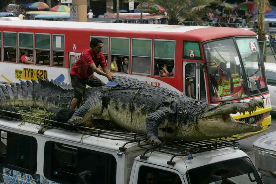 Alfred's Photos: Lolong (life-size replica) - from The ...