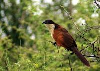 De dieren bestaan echt, ontdekte ik met behulp van Voëls van Suider-Afrika.
