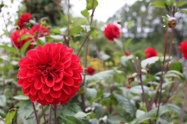 Botanisk Have | Blume