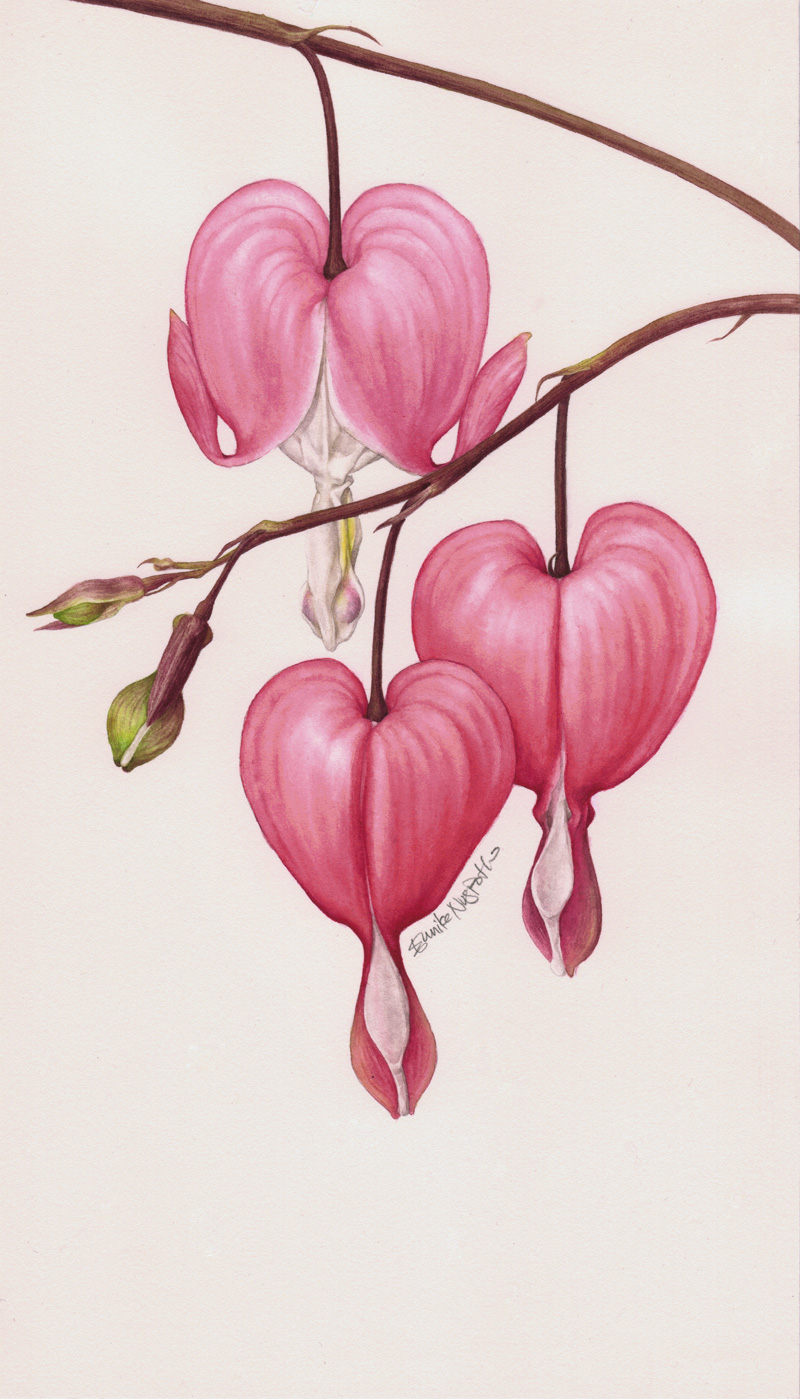 Eunike Nugroho Dicentra The Bleeding Heart