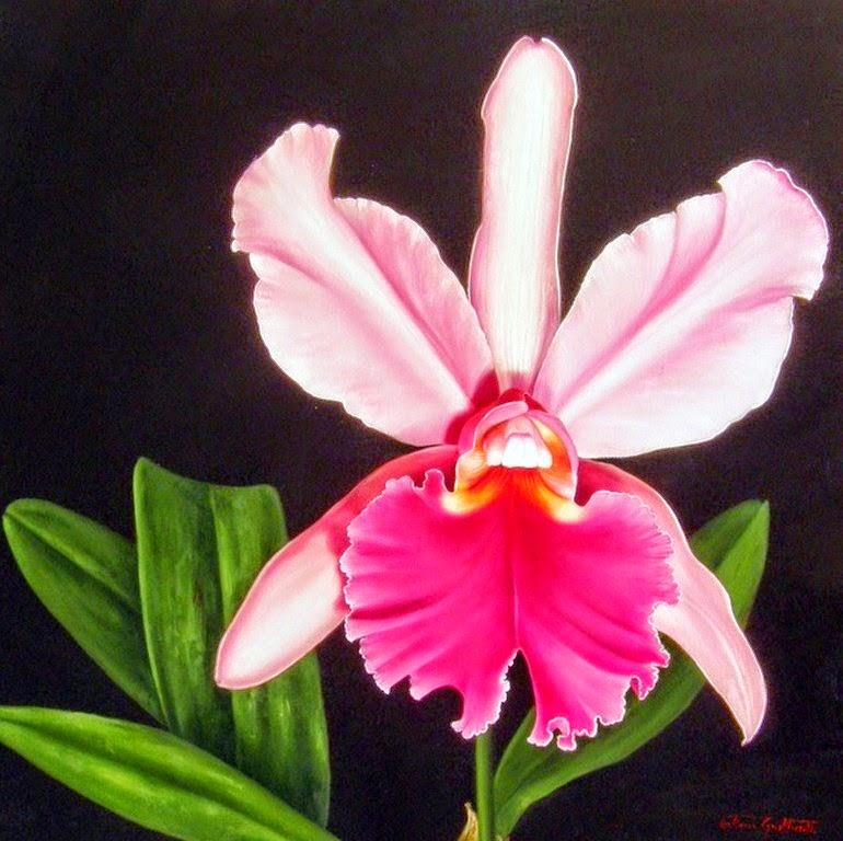 bodegones,con,orquideas,diferentes,colores