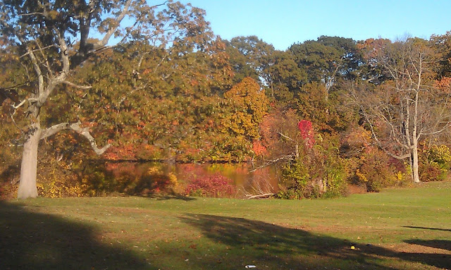 Fall day in park