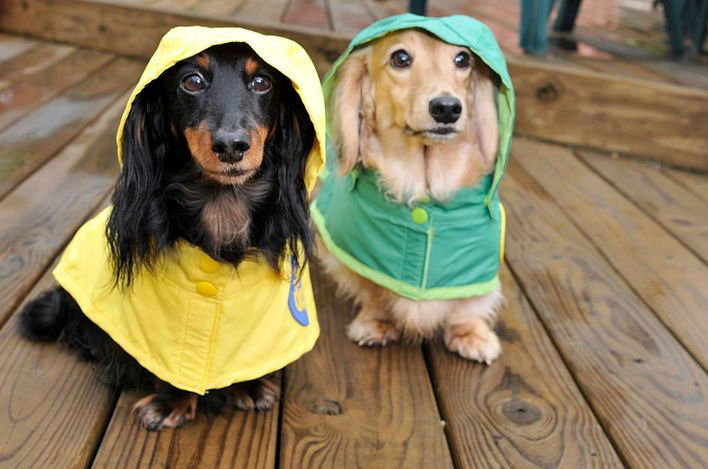 Pet Hurricane Preparedness