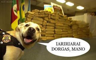 Dorgas, tô fora, drogas tô fora, dorgas larguei, cachorro drogas, cão poslicial meme
