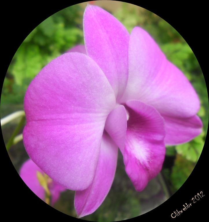 Fotos De Vasos De Flores Em Eva - Vaso de mini kalanchoe Eva Flores da estação Vasos