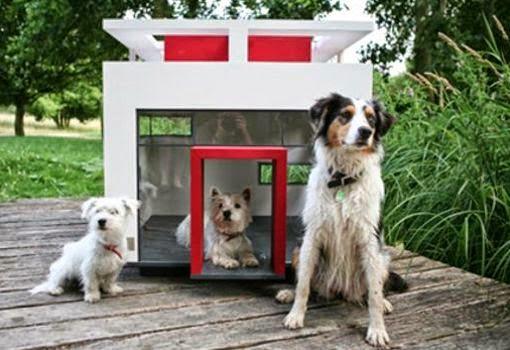 Las 10 Casas más Excentricas para Perros