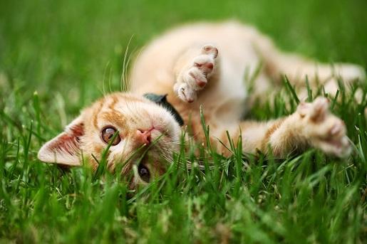 Czy wypuszczać kota na zewnątrz?