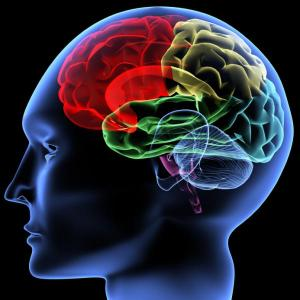 otak skizofrenia