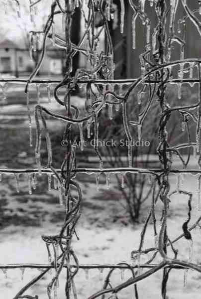 Icy Wire Photograph