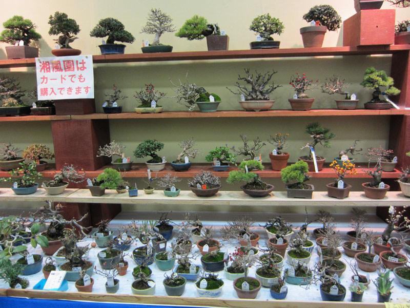 Lolobonsai shohin pros y contras for Estanterias para bonsais