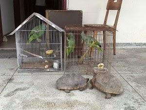 Três papagaios, dois jabutis e um mico foram  recolhidos(Foto: Secretaria de Meio Ambiente de Porto Seguro / Divulgação)