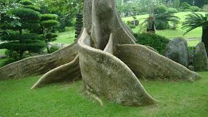 La vida necesita raíces permanentes.