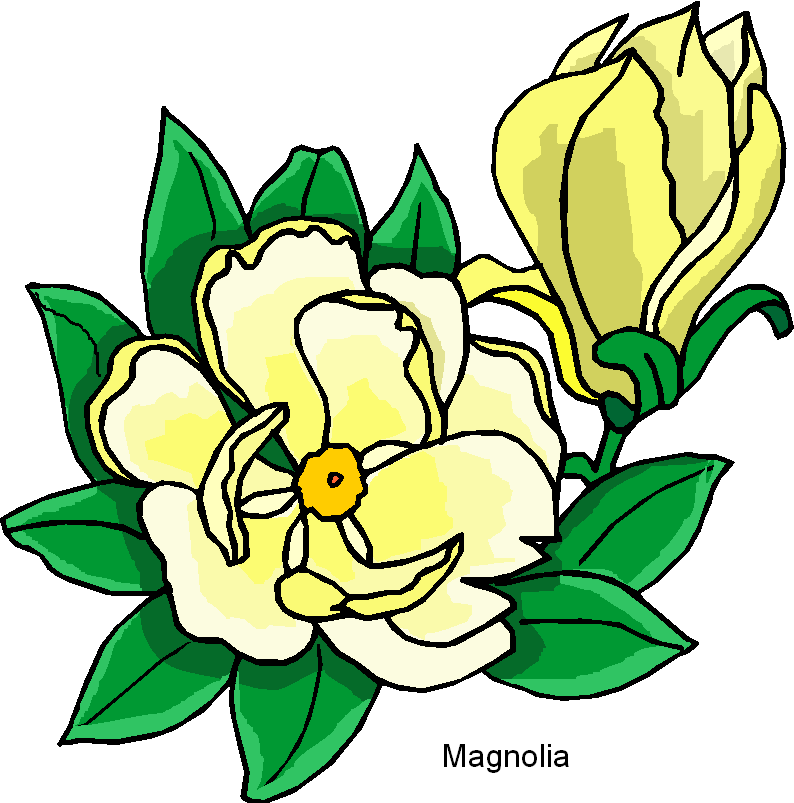Magnolia Free Flower Clipart