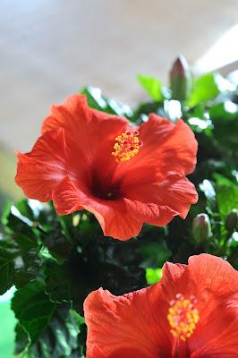 mayo mes de las flores