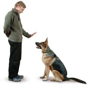 Curso para Educar Perros