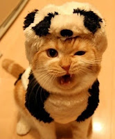 Grrr! Cute cat roar
